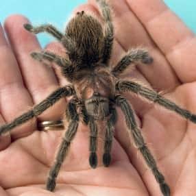 Human-Spider_web