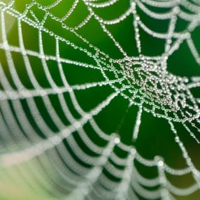 Spiders-Web_web