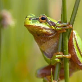 The-Climbing-Frogs_web