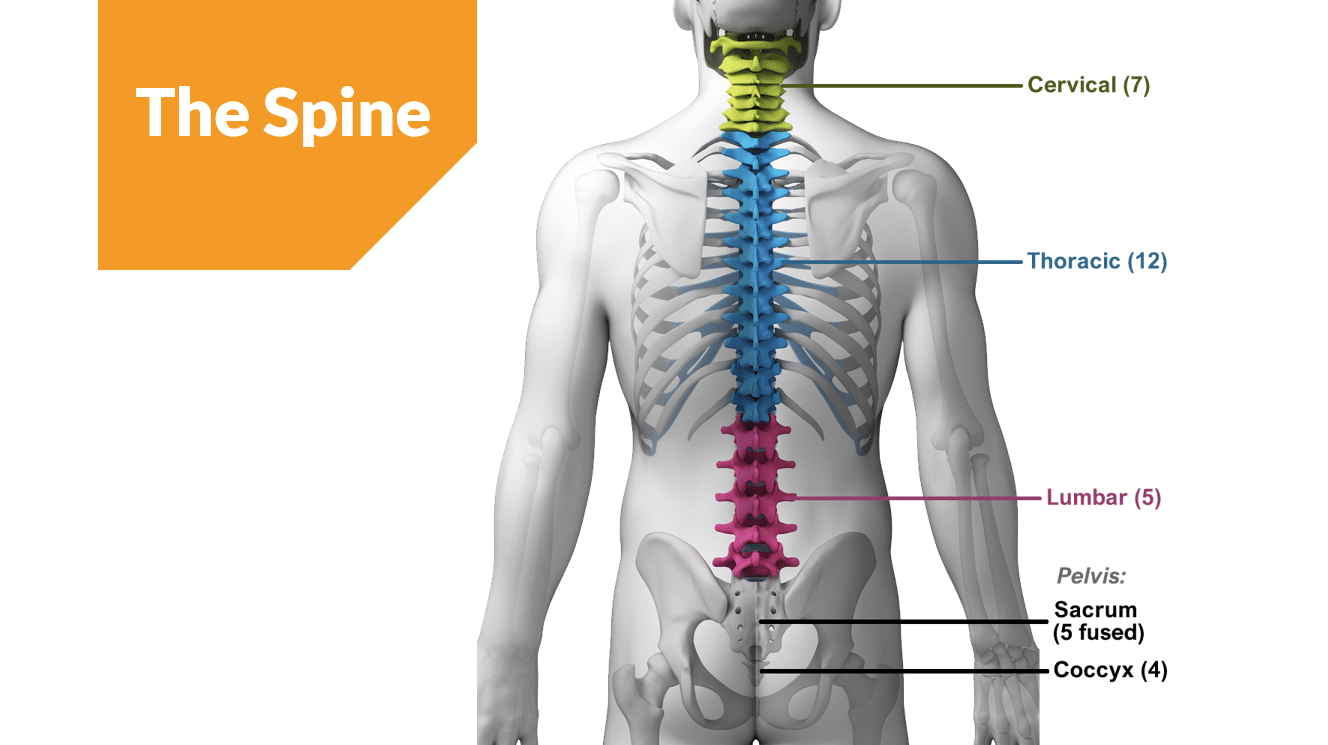 the-spine - Trainer Bubble