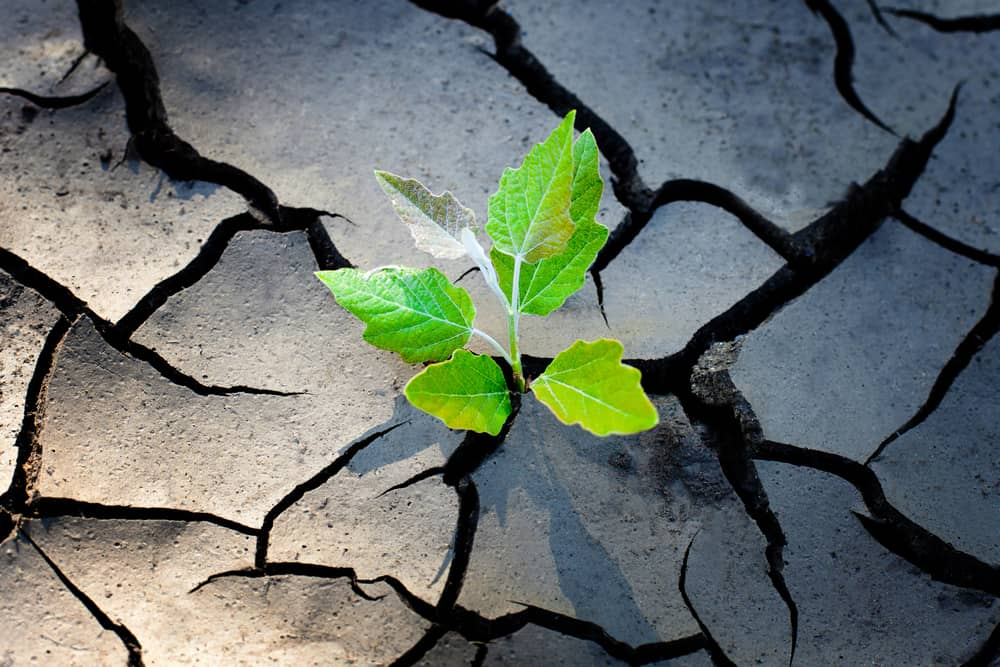 developing resilience e-learning