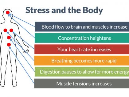 stress body